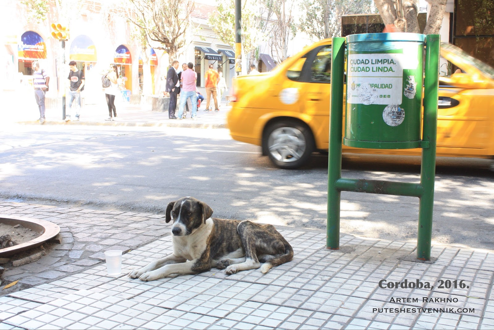 Собака на тротуаре.