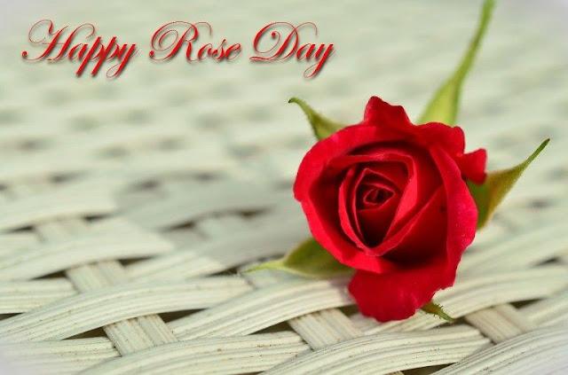 rose day memes