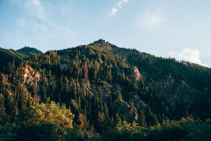 Largest National Forests In The United States
