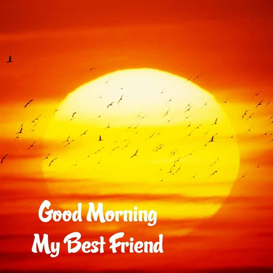 good morning friends pic