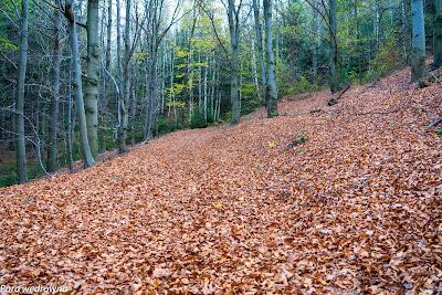 Jesienny dywan na dawnym szlaku niebieskim na Sokoliki
