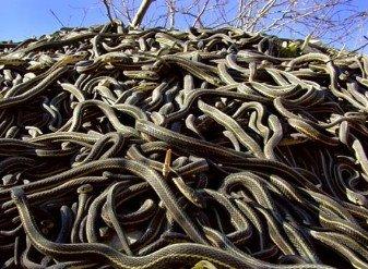 O Ninho De Cobras Pdf