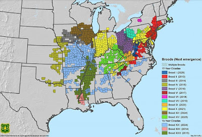 USDA - USFS Map of Cicada Broods