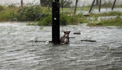 Viral, Anjing Diikat dan Ditinggalkan Saat Badai Harvey