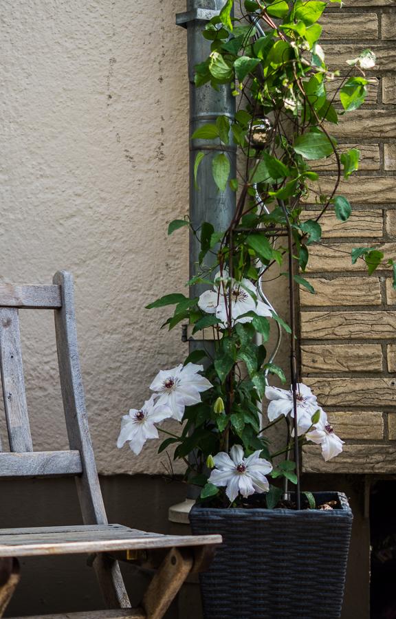 Blog + Fotografie by it's me! | fim.works | Haustürdekoration | Mai 2016 | rankende Clematis mit großen weißen Blüten, Holzklappstuhl