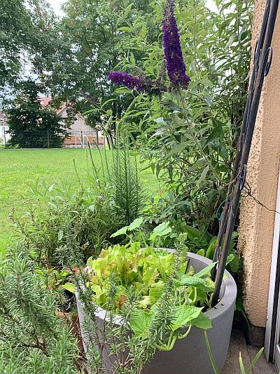 Gemüseanbau im Hochbeet-Kübel