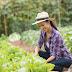 Motivos para fazer uma horta em seu condomínio