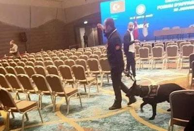 كلاب أردوغان تثير غضب و استغراب الجزائريين
