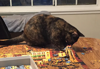 Semi-feral tortie actively takes apart the partially assembled puzzle