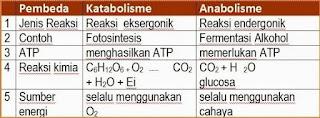 pembahasan biologi erlangga enzim dan metabolisme sel