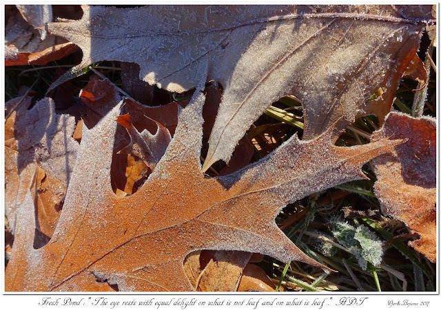 """Fresh Pond: """"The eye rests with equal delight on what is not leaf and on what is leaf."""" H.D.Thoreau"""
