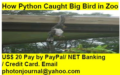 How Python Caught Big Bird in Zoo bird story book