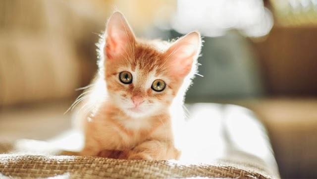 Οι πρώτες ημέρες με τη γάτα στο σπίτι – Πώς να τη βοηθήσετε να εξοικειωθεί με τον χώρο σας
