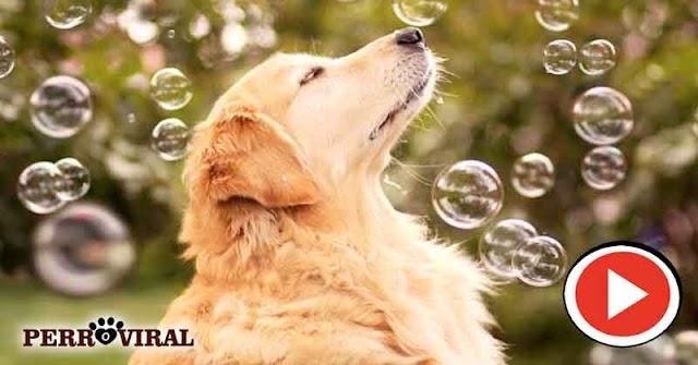 Videos de perros juguetones | Para todos los gustos