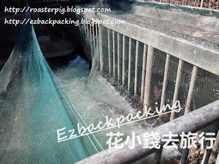 大欖郊野公園郊遊:東江水入水口