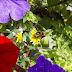 Bijen achtergrond met bloemen