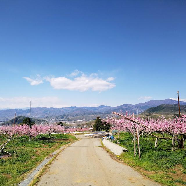 塩山 桃畑