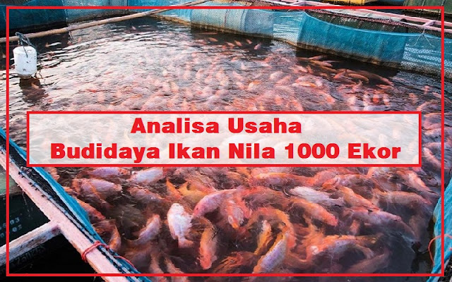 analisa usaha budidaya ikan nila 1000 ekor