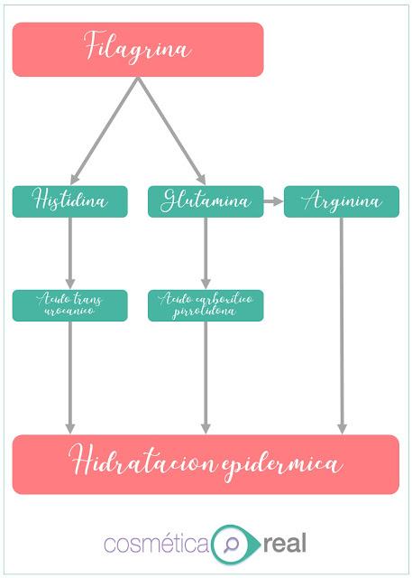 Factor Natural de Hidratacion