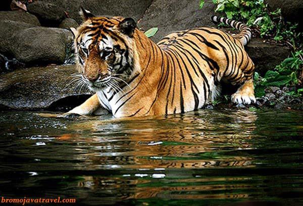 Safari Prigen Park of Bromo Tour Package