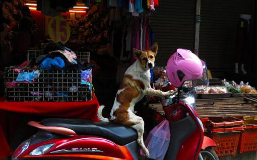 Mae Sot Market  Guard