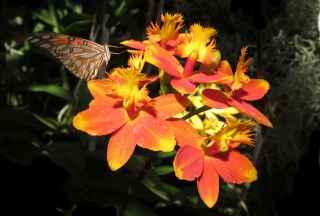 Foto 2 - orquídeas terrestres
