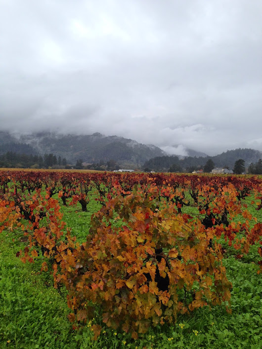 A personal note... from wine country!