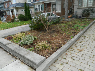 Bedford Park Toronto Fall Front Yard Cleanup After by Paul Jung Gardening Services--a Toronto Gardening Company