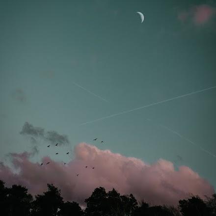 Transition von Chris Cross | Das Jazzy Lounge Album im Full Album Stream für den gepflegten Herbst 2019