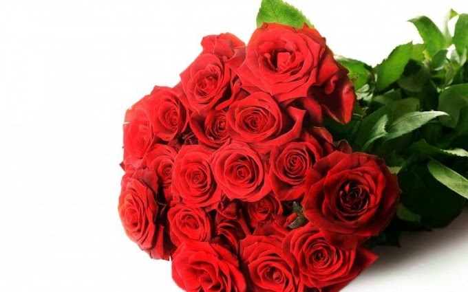 Top Reasons Why Red Flowers are Considered Romantic All Over The World