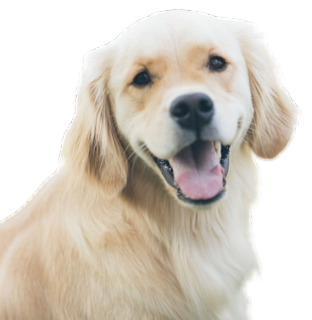 Dog PNG Images with Transparent Background