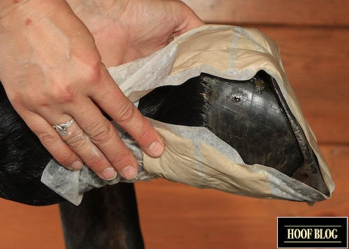 poultice horse hoof