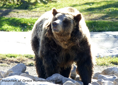 Grizzly and Wolf Center