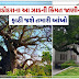 The 950-year-old tree in Vadodara is worth millions, for the first time the Supreme Court has ruled that