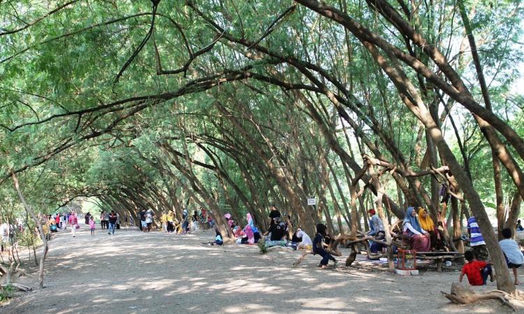 Pohon Miring Pancawati, Wisata Alam Favorit yang Unik di Karawang
