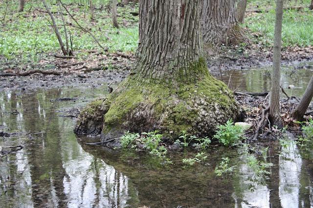 Spring water at The Morton Arboretum
