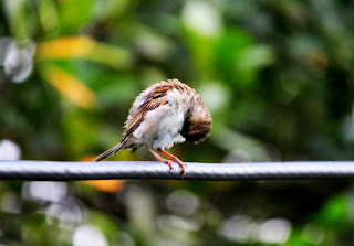 Alone Bird Pic