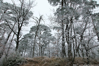 Réserve biologique dirigée du Cuvier, Fontainebleau