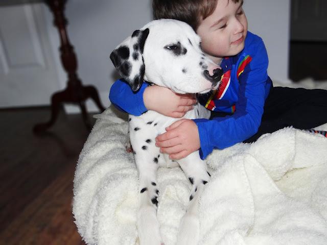 Dalmatian Puppy and Child