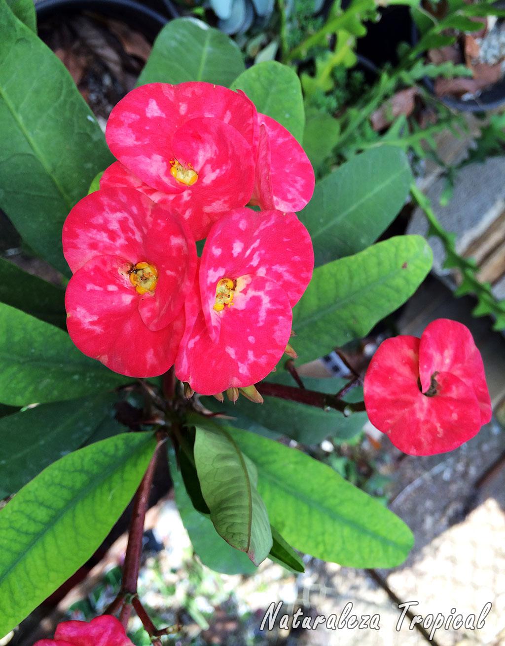 Naturaleza tropical 8 plantas que florecen todo el a o en - Plantas de jardin nombres ...