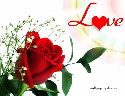 love rose wallpaper hd photos of red rose