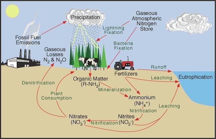 नाइट्रोजन चक्र