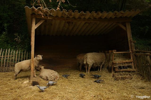 La fattoria di animali da cortile presente nel sito preistorico della Grotte du Roc de Cazelle