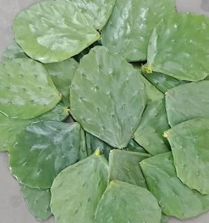 jual-kaktus-centong-impor.jpg