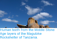https://sciencythoughts.blogspot.com/2018/08/human-teeth-from-middle-stone-age.html