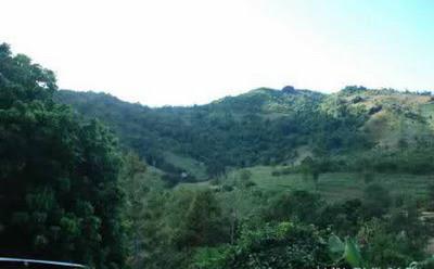 Ngủ lại với rừng- Nguyễn Minh Phúc