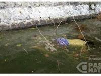BREAKING NEWS: Ada Mayat Wanita Cantik Berkaos Kuning dan Celana Biru Mengapung di Telaga Ngebel Ponorogo