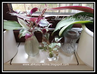Foto van kleine vaasjes met stekjes die nog wortel moeten schieten. Photo of small vases with cuttings that have yet to take root.
