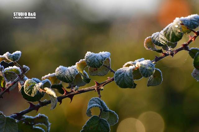 Αγροτοκτηνοτροφικός Σύλλογος Αργολίδας: Ζημιές από τον παγετό και σε πυρηνόκαρπα