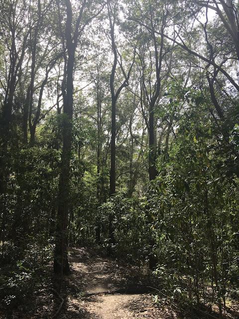 Long Weekend Bush Walks